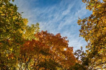 Herbst Blätter Bäume