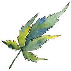 Green cannabis leaf. Leaf plant botanical garden floral foliage. Isolated illustration element. Aquarelle leaf for background, texture, wrapper pattern, frame or border.