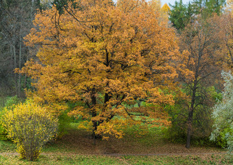 Tree with yellowing leaves in the park