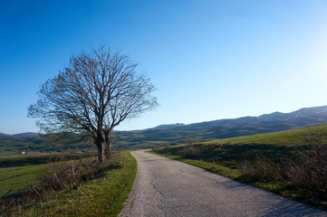 Magical landscape in Montenegro with a lone tree on a hill and blue sky. Lonely tree against a blue sky at sunset. Beautiful landscape with lone tree stands in a green field
