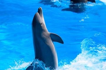 Portrait of dolphin performing in a dolphin show