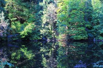 Wasser und Wald, Allgäu, Bayern