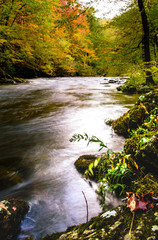 Peaceful stream in a lush forest in early autumn