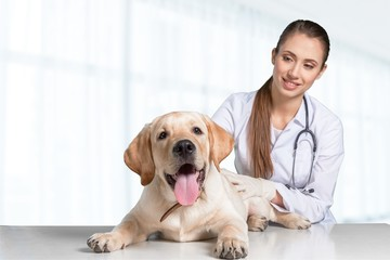 Attractive young female doctor with funny canine patient