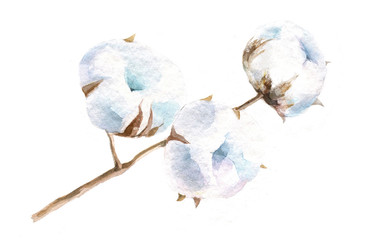watercolor, isolated illustration of twigs and flowers of cotton, drawing by hand branches of cotton on a white background