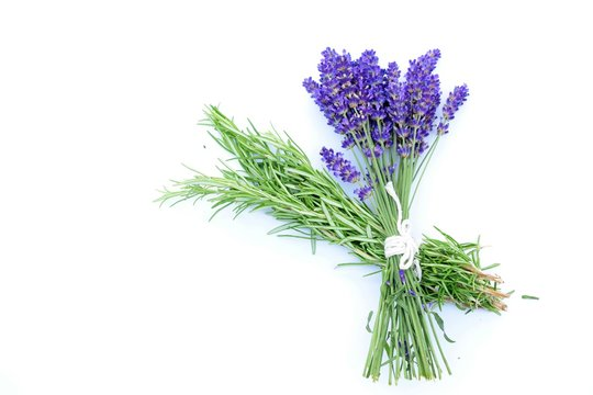 Bunch of handpicked Rosemary and lavender