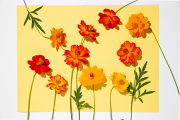 Flowers on yellow sheet of paper