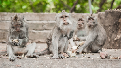 Photo of monkey family eating fruits in secret monkey forest