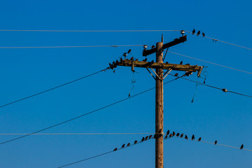Crows on a power line pole