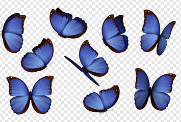 Butterfly vector. Purple isolated butterflies. Insects with bright coloring on transparent background
