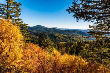 Autumn Scenery In Mount Spokane State Park, Spokane, Washington, USA