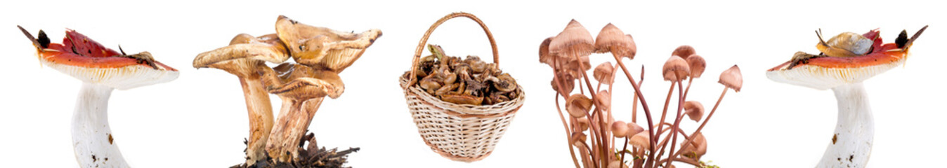 Basket and mushrooms. Collage