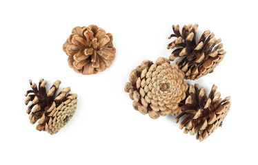 Pine cones isolated on white background, top view