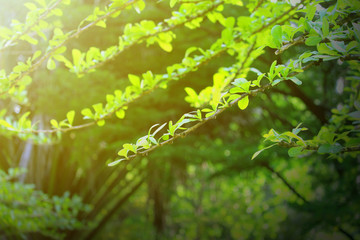 nature view of green leaf.