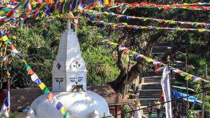 Monkey walking on top of a Buddhist Stupa in Kathmandu, Nepal