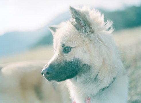 風に吹かれてたそがれる犬