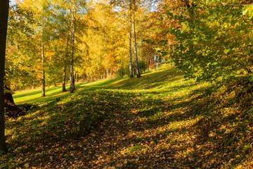 Beautiful autumn landscape with yellow trees,green and sun. Colorful foliage in the park. Falling leaves natural background