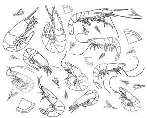 set of a shrimp sketch