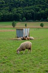 Tierhaltung in Bayern