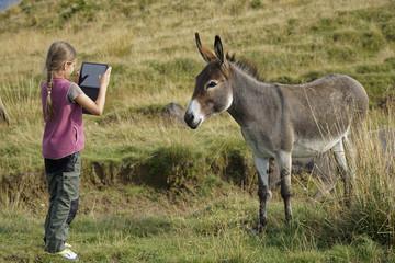 Mädchen fotografiert Esel mit Tablet in Bucegi Gebirge, Rumänien