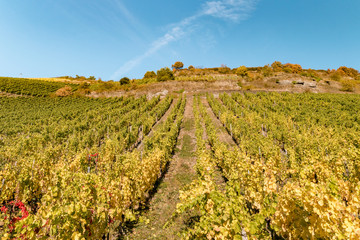 Bacharach Germany Middle Rhine Valley wine field on the hill