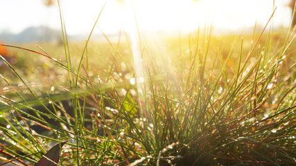 Morning dew on the grass, sunlight, rays, water drops, shine. Vegetative natural background, autumn grass. Morning in the sun, close-up. Background bokeh.