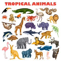 Tropical animal concept background. Cartoon illustration of tropical animal vector concept background for web design