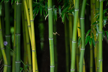 Oriental Bamboo Background