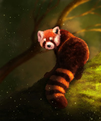 Illustration of Red Panda. Digital painting