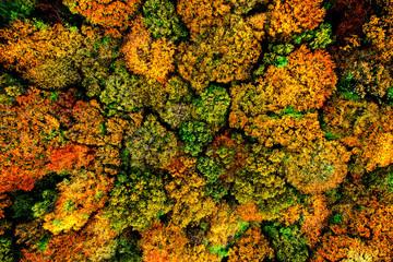 Baumkronen im Herbst aus der Luft aufgenommen