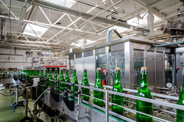 bottles with champagne wine are moving along the conveyor at the factory of grape and sparkling wine