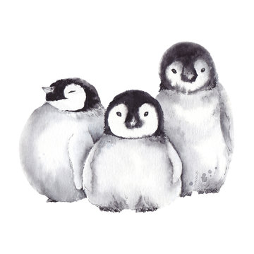 Cute baby penguin family. Watercolor illustration on white background.