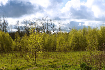landscape, sky, forest, clouds, green, trees, spring, summer, country