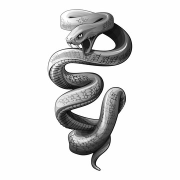 snake vector draw