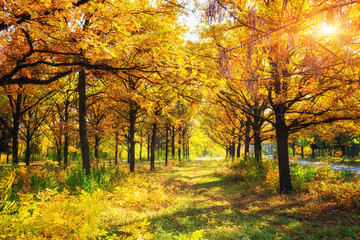 sunny day in golden autumn park, natural background