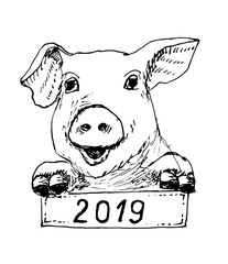 Vector illustration of pig, sketch, hand drawing illustration. Year of the Pig 2019