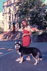 Blue-eyed husky. Beaming appealing woman feeling contended and joyful while standing near her dark blue-eyed husky dog