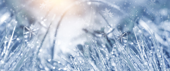 Winter background and winter morning. Frozen grass under the snow, snowflakes and sunlight, rays.