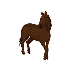 Gorgeous horse with dark brown coat, long flowing mane and tail. Mammal animal with hooves. Flat vector design