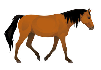 Vector side view walking beautiful purebred brown horse equisterian illustration