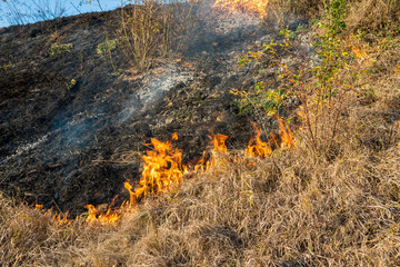 Burning dry vegetation at roadside, after a dry summer and autumn  , conceptual image of human negligence.