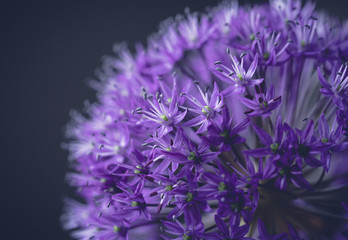 Close-up of purple flowers growing against colored background
