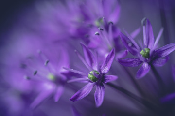 Extreme close-up of purple flowers growing outdoors
