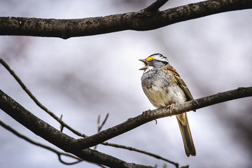 Close-up of bird chirping while perching on branch