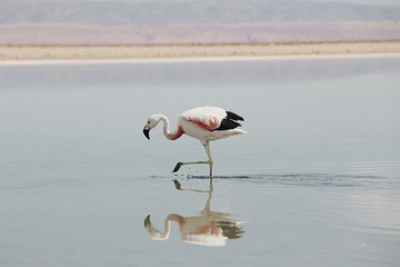 Side view of flamingo in lake during sunny day