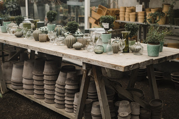 Vases and pots with plants on table at greenhouse