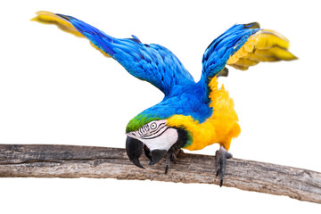 colorful parrot against a white background