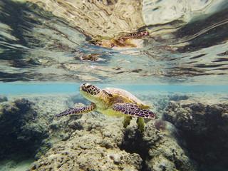 Sea turtle swimming undersea