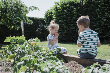 Siblings eating fruits while sitting on retaining wall by plants at park