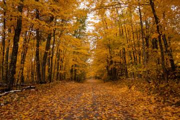 golden orange tree driveway